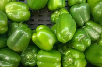 зеленый сладкий перец